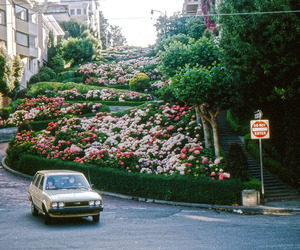 nature, vintage, and flowers image
