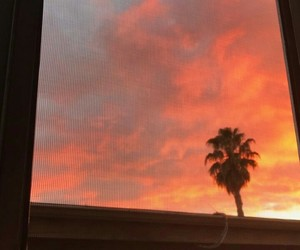 clouds, palm tree, and pink image
