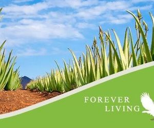 forever living, forever living products, and forever living việt nam image