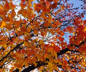 color, fall, and cool image