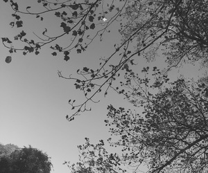 black and white and trees image