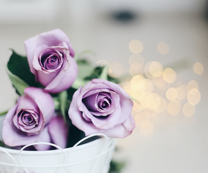beauty, purple, and flowers image