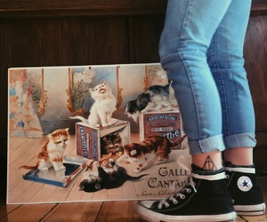 cat, hp, and paint image