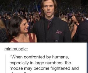supernatural, moose, and funny image