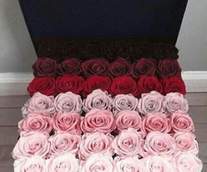 beautiful, roses, and ombre image