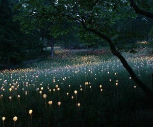 light, flowers, and nature image