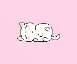 header, cat, and pink image