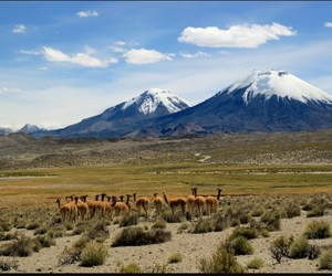 chile and places image