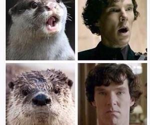 sherlock, funny, and otter image