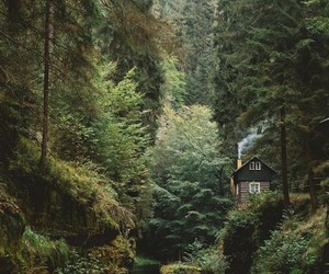 green, nature, and bosque image