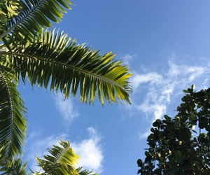 clouds, palm, and nature image