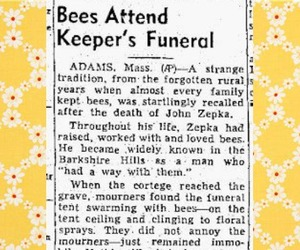 bees, floral, and flowers image