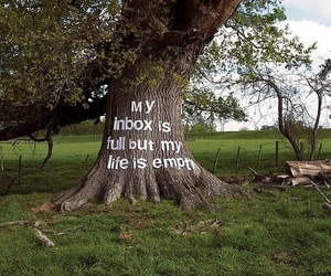 quote, tree, and life image