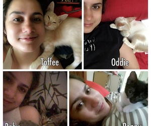 adopt, cats, and mylife image