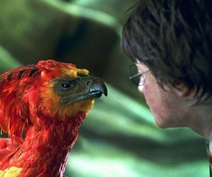 harry potter, phoenix, and fenice image