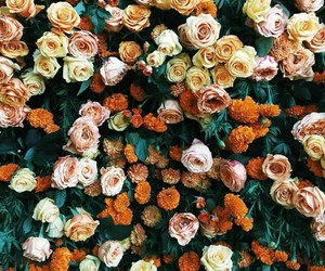 flowers, roses, and orange image