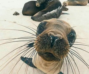 animal, beach, and nature image