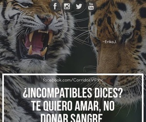 frase, amar, and incompatibles image