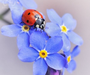 flowers, forget-me-not, and ladybug image