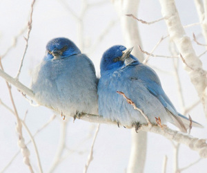 birds, white, and blue image