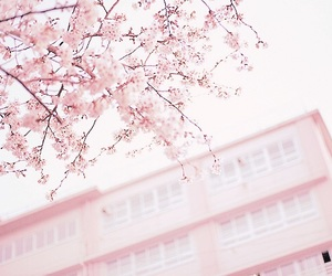 pink, sakura, and flowers image