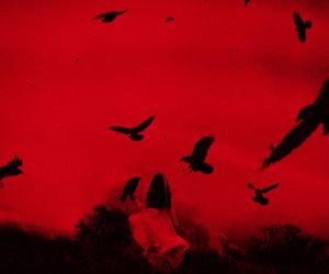 aesthetic, birds, and dark image