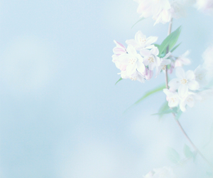 blue, flowers, and pastel image