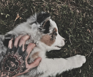 dogs, pets, and cute image