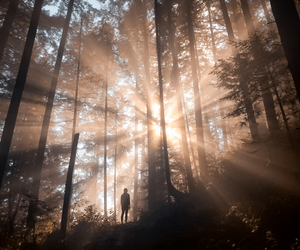 sunlight and forest image