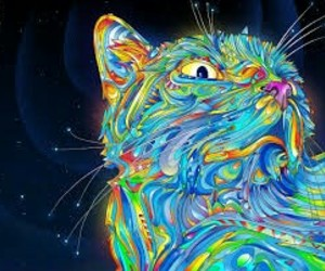 cat, colors, and art image