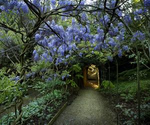 botanic garden, flowers, and kew gardens image