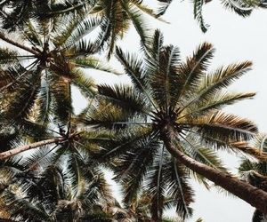 background, green, and tropical image