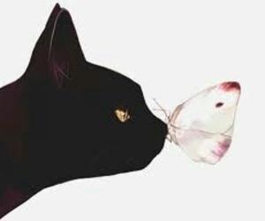 animal, black cat, and beautiful image