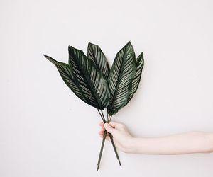 botanical, leef, and green image