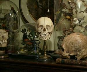 skull and creepy image