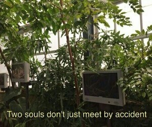 quotes, soul, and green image
