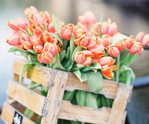 flowers, beautiful, and tulips image