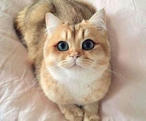cat, котик, and cute cat image