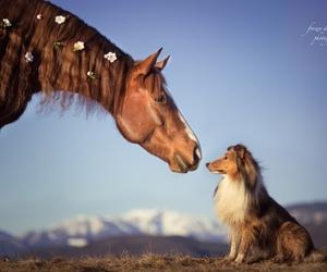 animals, dog, and horse image