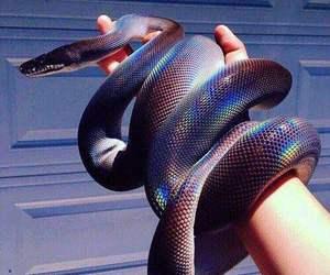 snake, animal, and grunge image