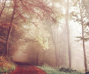 autumn, forest, and green image