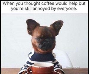 coffee, funny, and dog image