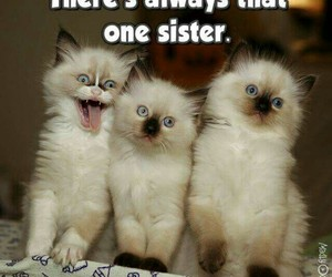 funny pets image