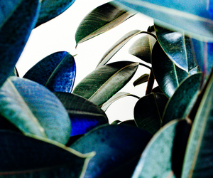 blue, nature, and leafs image