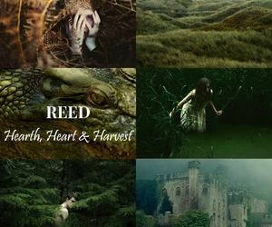 aesthetic, reed, and meera image