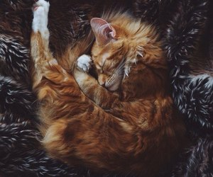 cat and ginger image
