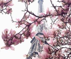 city, paris, and spring image