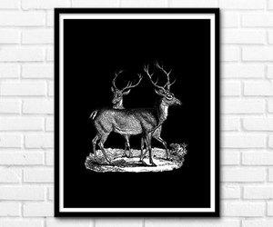 animal, art prints, and printable image