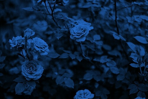 Blue flowers//aesthetic discovered by ☾᥆ᥣι ! on We Heart It