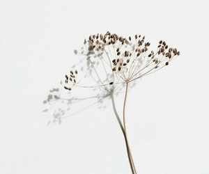 flowers and simple image